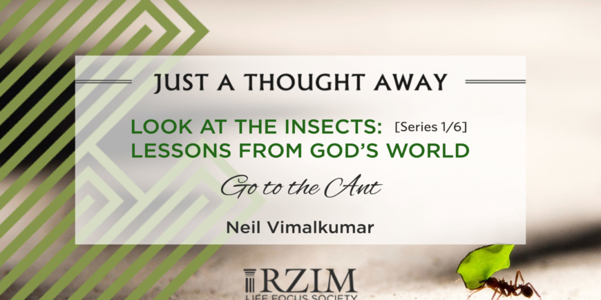 LOOK AT THE INSECTS: Series 1/6 – Lessons from God's World – Go to the Ant