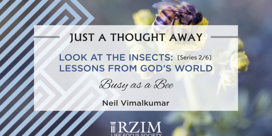 Look at the Insects: Series 2/6 – Lessons from God's World – Busy as a Bee