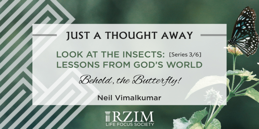 LOOK AT THE INSECTS: Series 3/6 Lessons from God's World – Behold, the butterfly