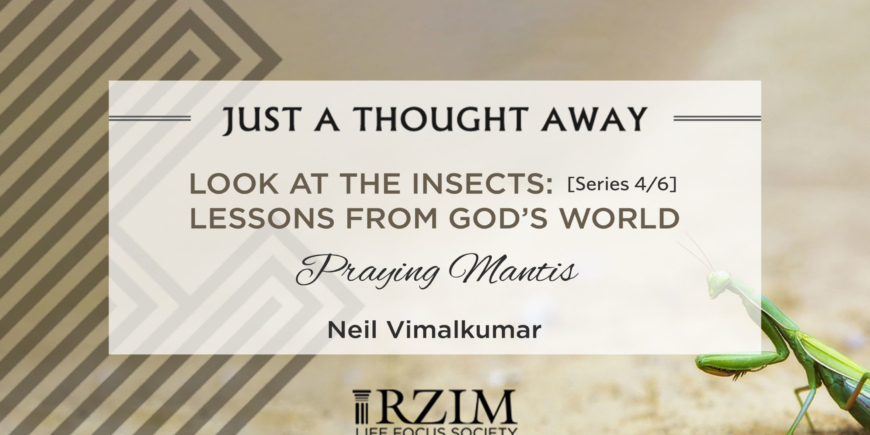 LOOK AT THE INSECTS: Series 4/6 – Lessons from God's World – Praying Mantis