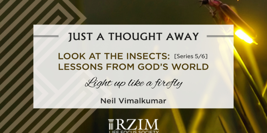 Look At The Insects: Series 5/6 – Lessons From God's World – Light Up Like A Firefly