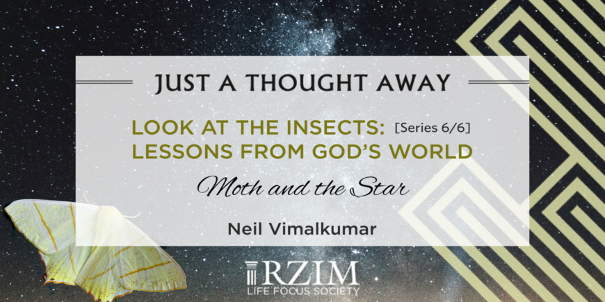 Look At The Insects: Series 6/6 – Lessons From God's World – Moth And The Star